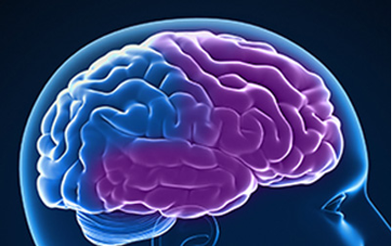 Image: View of frontal-temporal area of the brain.