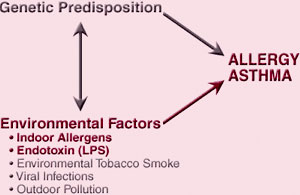 Relationship Between Genetics, Environmental Factors, and Asthma