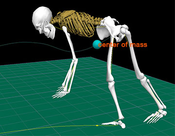 An illustration of the skeleton of a gymnast completing a cartwheel.
