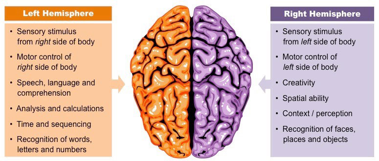 Illustration: The Hemispheres of the Brain