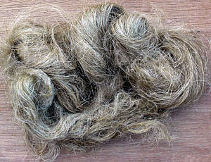 Photo of Cannabis Sativa Fiber