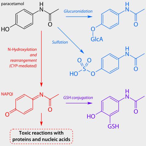 image: Parecetamol Metabolism