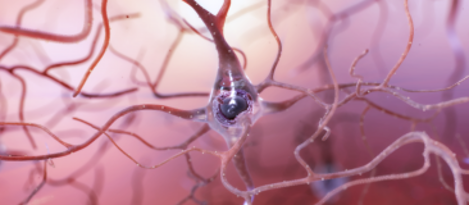 Image: Healthy Neuron with Many Connections