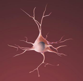 illustration of a healthy nerve cell