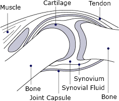 A drawing of a normal joint.