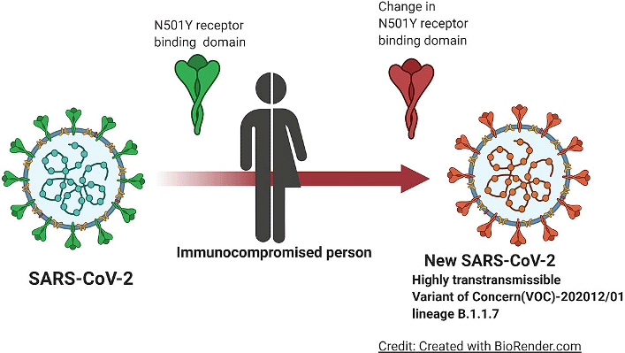 Illustration: Transformation of SARS-CoV-2 Into New Variant of Concern