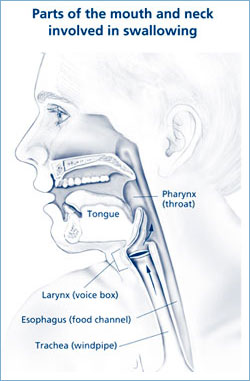 A drawing showing the parts of the mouth and neck involved in swallowing.